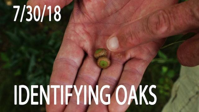 Winke's Blog: How To Identify Oaks