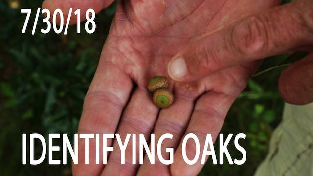 Winke's Blog: How To Identify Oaks