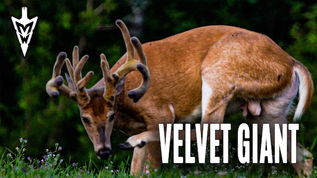 Setting Sights On a Velvet Giant | Pre-Season Scouting Tips | Midwest Whitetail