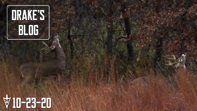 Drake's Blog: Bucks Hitting Scrapes |...