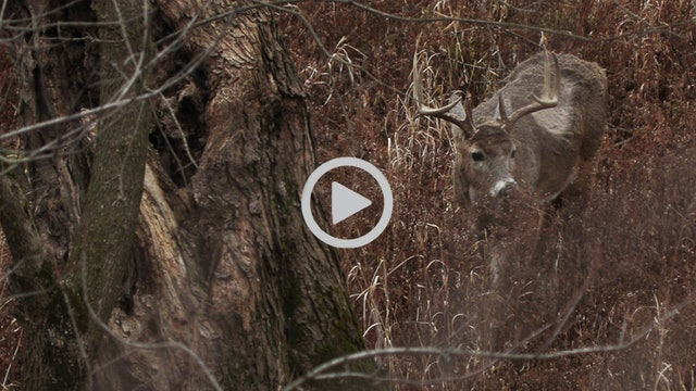 12-25-17: Late Season Without Food | Midwest Whitetail