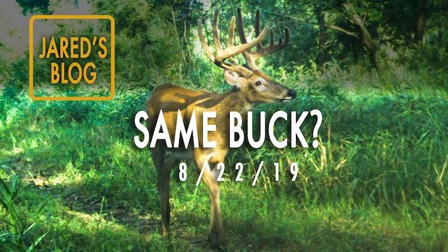 Jared's Blog: Velvet Bucks, Taking Inventory