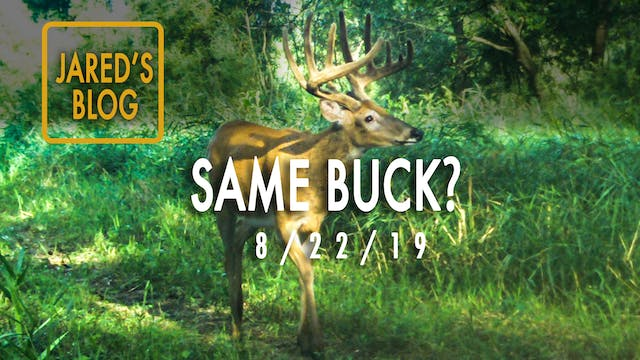 Jared's Blog: Velvet Bucks, Taking In...
