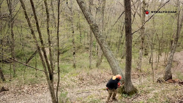 Timber Stand Improvement (TSI) Tips | Designing Deer Hunting Land | Pay Dirt