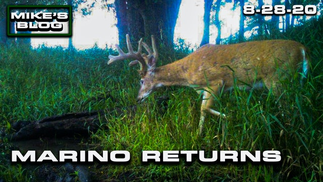 Mike's Blog: The Legendary Marino Returns | The Stage Is Set for Deer Season