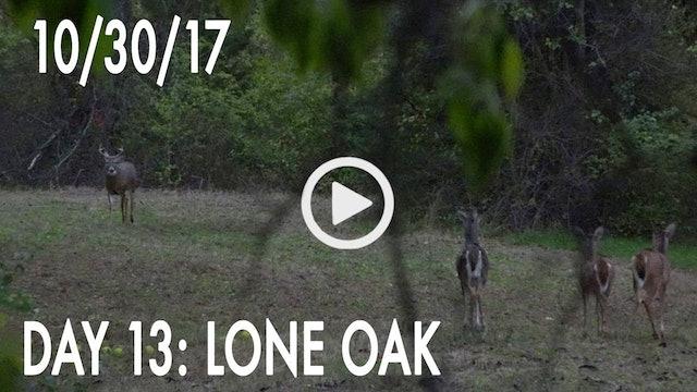 Winke Day 13: Lone Oak