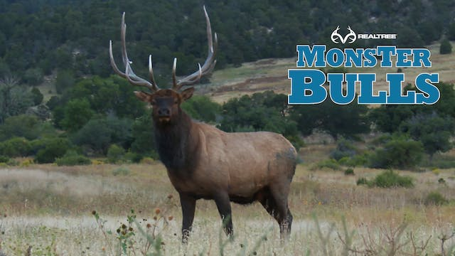 Bull Runs from 400 Yards to 45 Yards