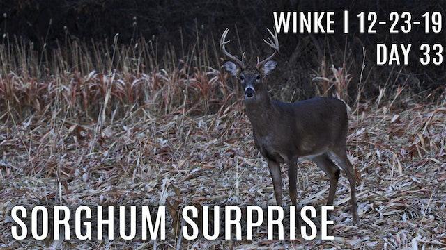 Winke Day 33: Deer Hit Sorghum as Preferred Food Source