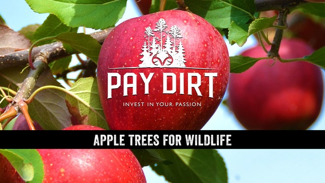 Apple Trees for Wildlife - Will They Attract Deer?