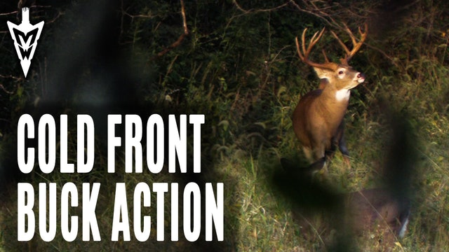 10-7-19: Cold Front Buck Action | Midwest Whitetail