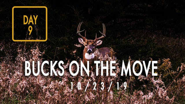 Jared Day 9: Bucks On The Move