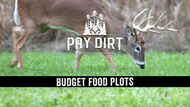Poor Man's Food Plots, Plus Benefits of Auctions for Land Sales