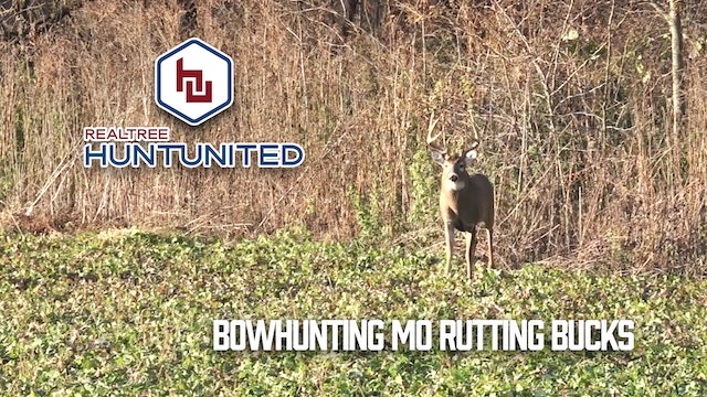 Bowhunting Missouri Bruisers During the Rut