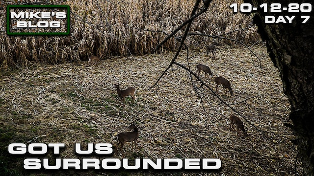 Mike's Blog: The Deer Have Us Surrounded | Awesome Iowa Cold Front