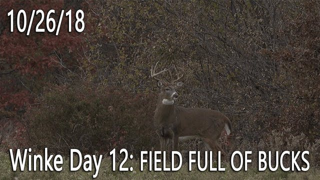 Winke Day 12: Field Full Of Bucks