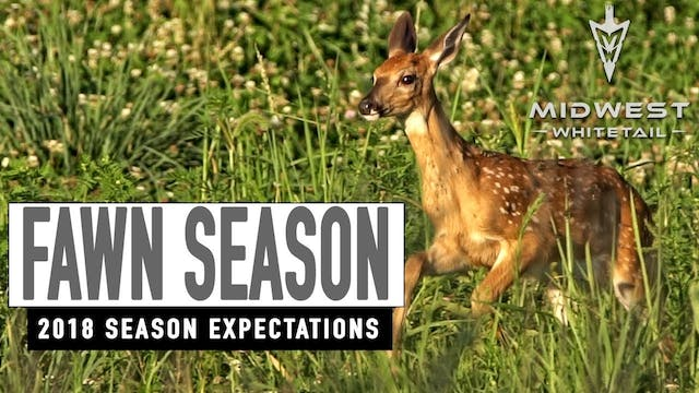 6-4-18: Fawn Season | Midwest Whitetail