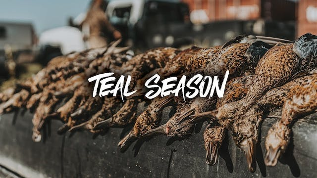 Opening Day of Teal Season | Great Mi...