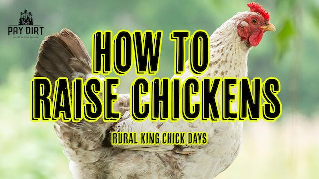 March Chick Days at Rural King | How ...