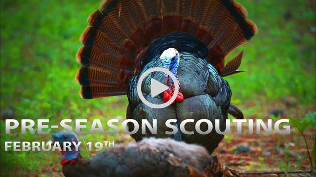 2-19-18: Pre-Season Scouting Tips, Trail Cam Strategies | Spring Thunder
