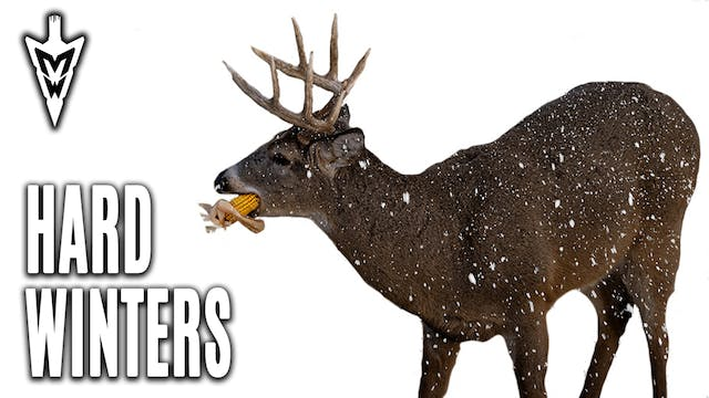 Should You Feed Deer? Harsh Winter Ef...