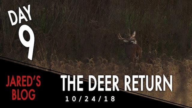 Jared's Blog: Deer Return After the Flood