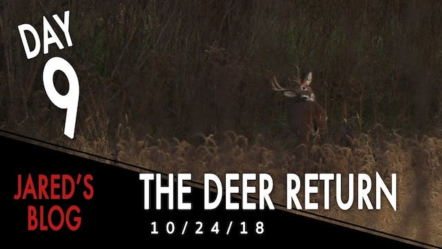 Jared's Blog: Deer Return After the F...