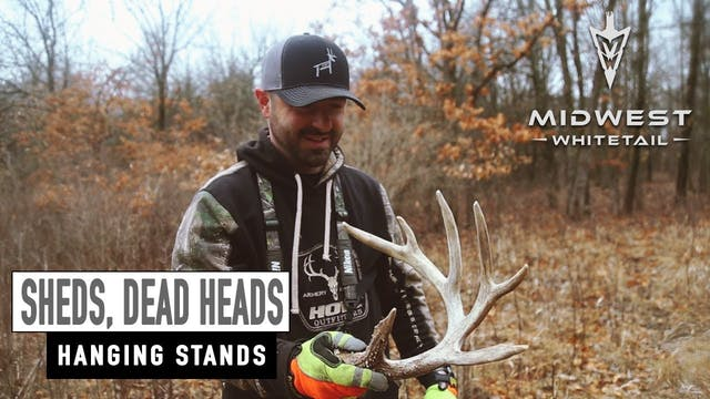 3-19-18: Shed Antlers, Hanging Stands...