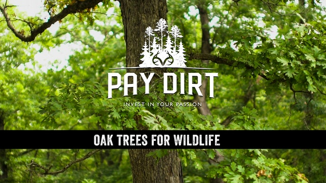 3 Ways to Establish Oak Trees