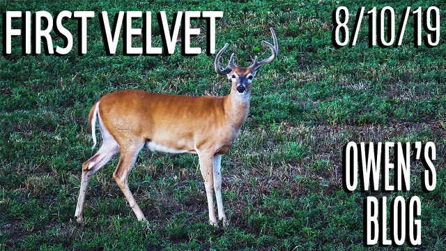 Owen's Blog: First Velvet Sit, Hitlist Bucks