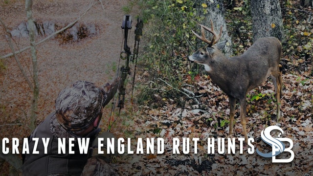 The Whitetail Rut Is Heating Up | Classic Northeastern Deer Hunting | Sea Bucks