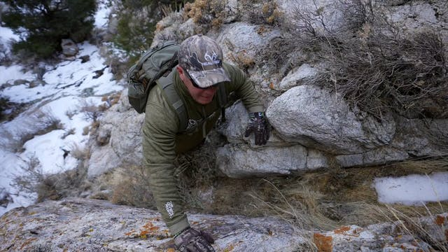 Mountain Lion Hunting in the Snow   B...