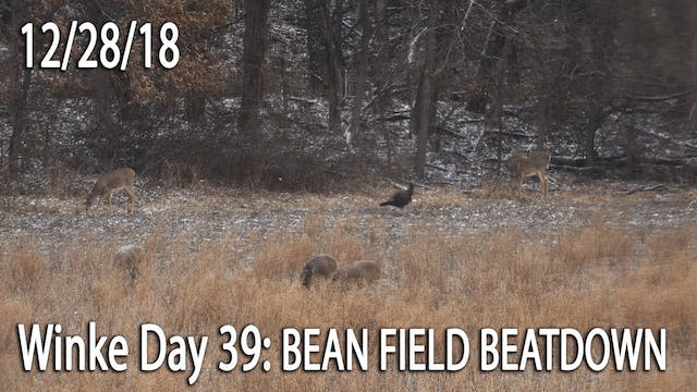 Winke Day 39: Bean Field Beatdown