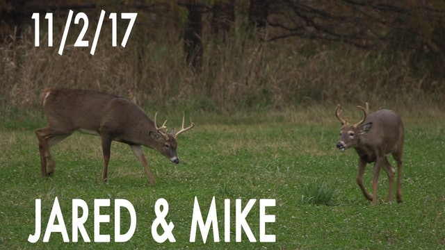 Jared's Blog: November Velvet Buck