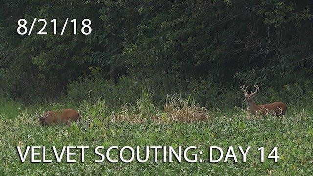 Winke's Blog: Velvet Scouting Day 14