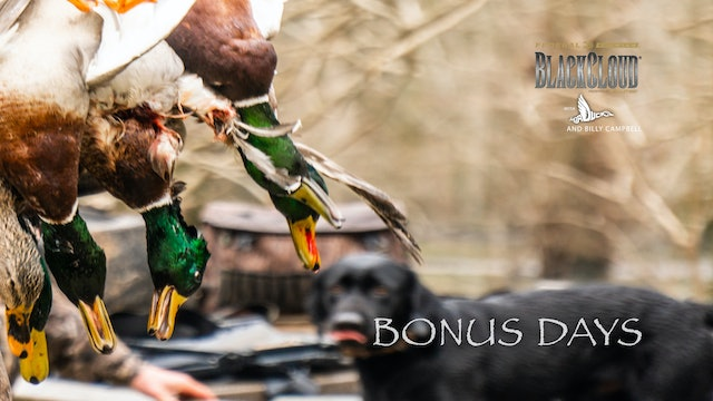 Last Go: A Bonus Bag of Greenheads