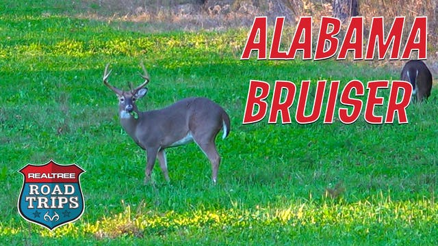 Targeting an Alabama Bruiser | Goins ...