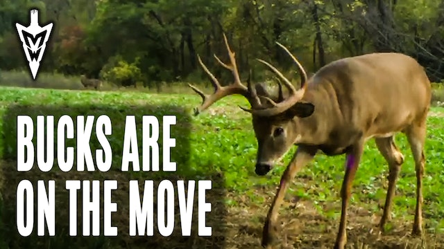10-12-20: Bucks Are On the Move | Early Season Encounters | Midwest Whitetail