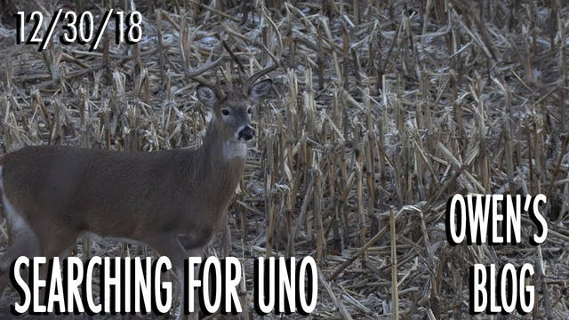 Owen's Blog: Still Hunting Uno
