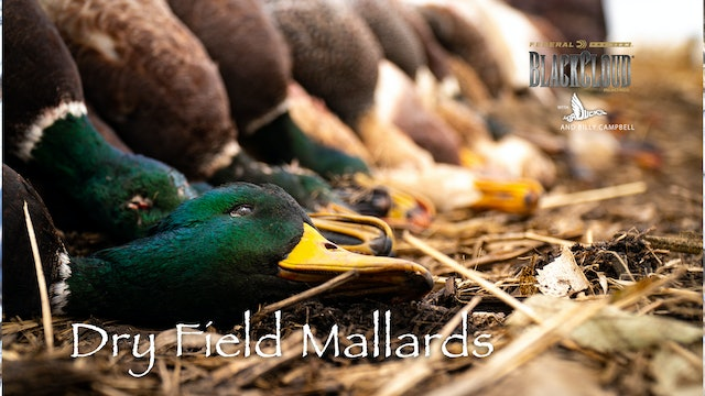 Flooded-Timber Duck Hunting, South Dakota Dry-Field Mallards