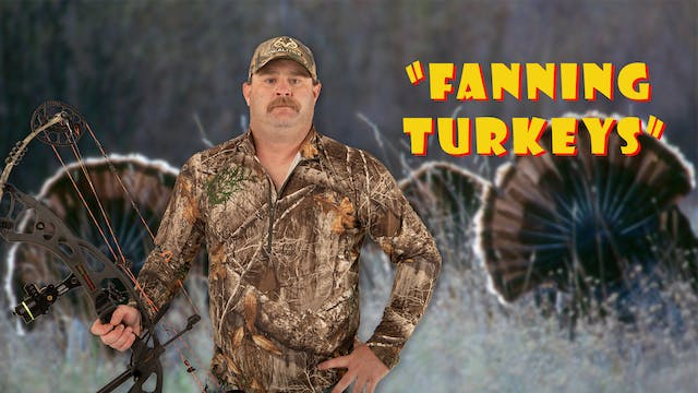 "Pitts on: ""Fanning Turkeys"""