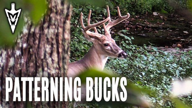 9-16-19: Early Season Encounter, Patterning Bucks | Midwest Whitetail