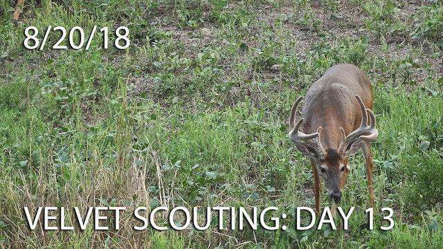 Winke's Blog: Velvet Scouting Day 13