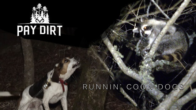 How to Hunt Coons with Coon Dogs