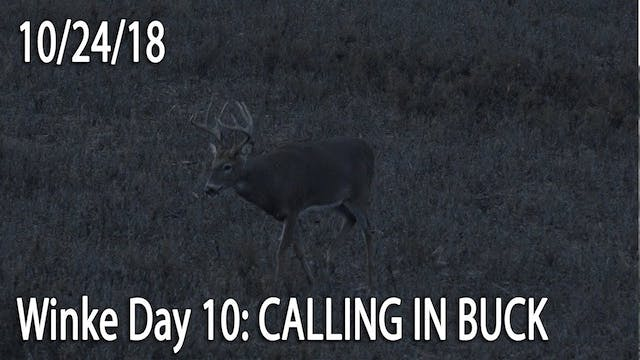 Winke Day 10: Calling In Buck