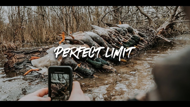 Duck Hunting with Perfect Limit | Flooded Arkansas Timber | DayBreak Outdoors