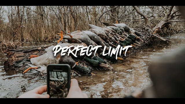 Duck Hunting with Perfect Limit | Flo...
