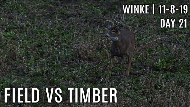 Winke Day 21: Field vs Timber, Best R...