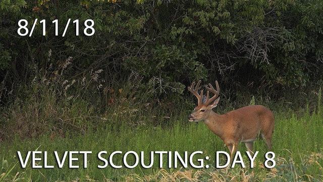 Winke's Blog: Velvet Scouting Day 8