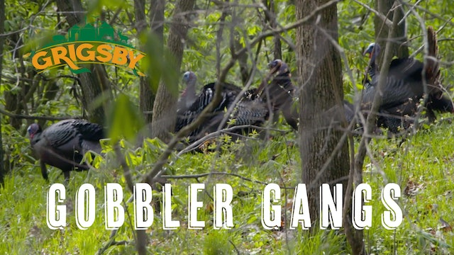 Two Gangs of Grigsby Gobblers | Two Giant Birds Tagged | Grigsby