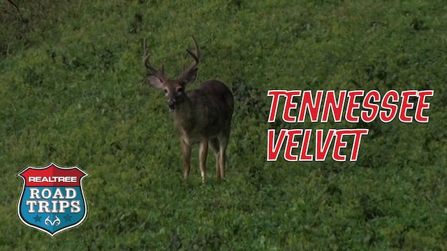The Early Season Tennessee Velvet Hunt | Realtree Road Trips